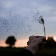 Les coulisses de Philéole, où comment nous est venu l'idée d'une mini éolienne verticale